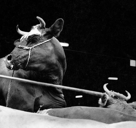 Photogramme de Abattoirs, de Thierry Knauff et Marc Trivier, 1987 (11 minutes)